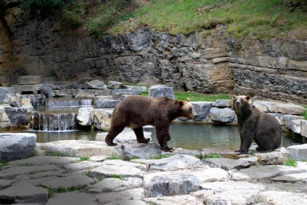 ours han sur lesse